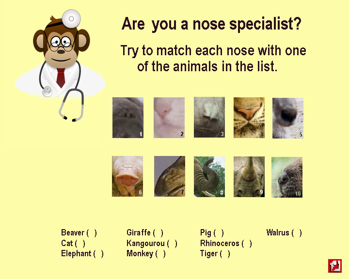 Are you a nose specialist? Try to match each nose with one of the animals in the list. Beaver - giraffe - pig - walrus - cat - kangourou - rhinoceros - elephant - monkey - tiger