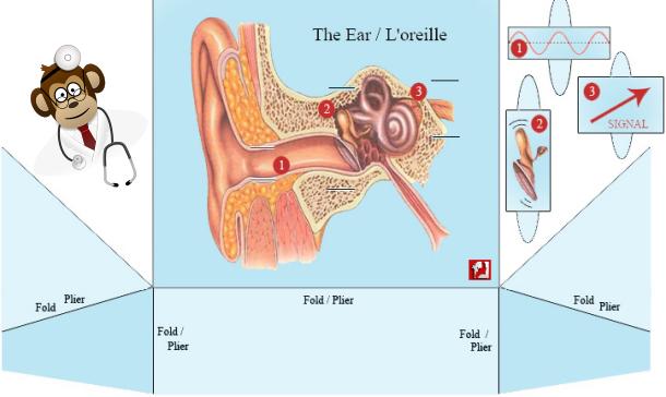 ears-610